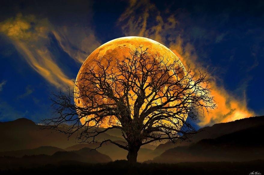 boom en ondergaande zon